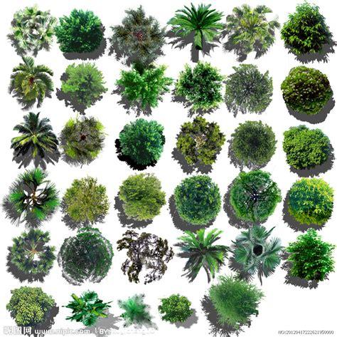 平面景观素植物源文件 psd分层素材 psd分层素材 源文件图库 昵图网nipic com