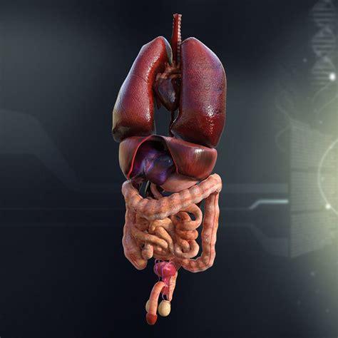 Human Organs 3d Model human organs 3d model max obj 3ds fbx lwo lw