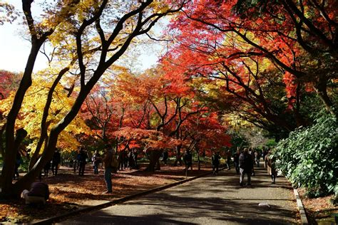 The In Autumn autumn leaves in shinjuku gyoen ambassadors japan