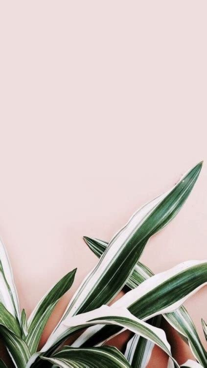 wallpaper for iphone 5 plant girly backgrounds tumblr