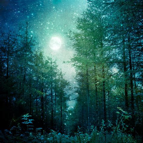 enchanted magical forests 0994355432 nature photography enchanted forest trees moon and stars