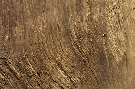 Woods Herbal Wood Background Www Imgkid The Image Kid
