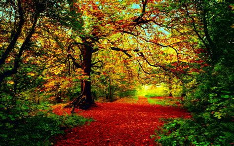 Herfst Full Hd Wallpaper And Achtergrond 2560x1600 Id 444086 Most Beautiful Background Color Image
