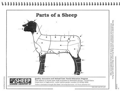sheep diagram diagram wiring diagram