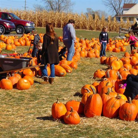 texas pumpkin patches  daytripper