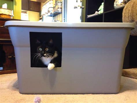 theme names for litter of kittens creative cat litter boxes design decoration