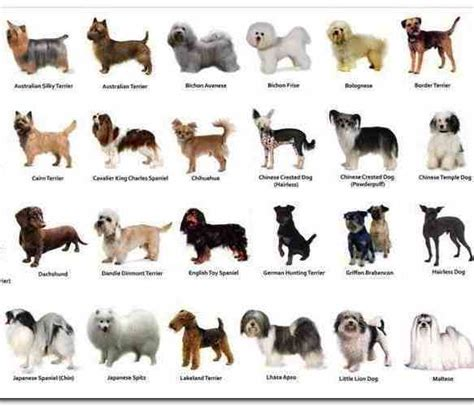 small haired breeds small haired breeds list mapleridgewind pictures gallery types of dogs and