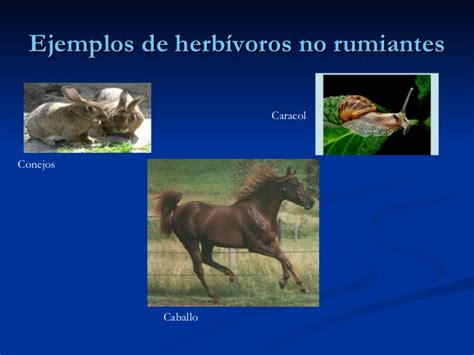 imagenes de animales rumiantes aparato digestivo de rumiantes