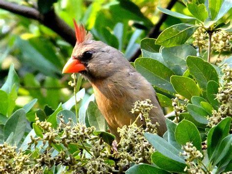 1000 images about birds on pinterest parrots
