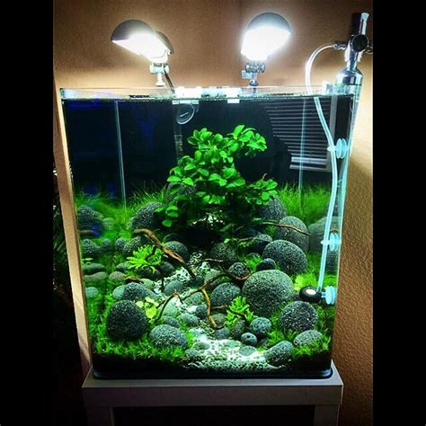 fish tank aquascape die besten 20 aquascape aquarium ideen auf pinterest