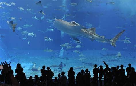 Hp Sony Aquarium wallpaper okinawa churaumi aquarium underwater world japan images for desktop
