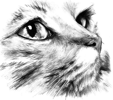 how to draw a zombie cat zombie cat step 8 apps directories