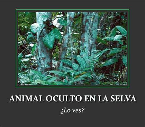 imagenes de juegos mentales visuales para facebook otro animalito camuflado en la selva el club del ingenio