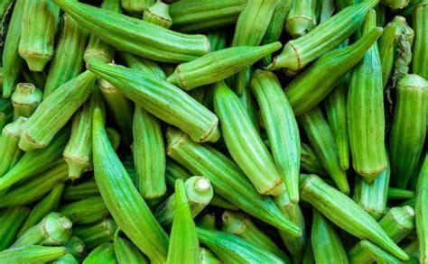 manfaat luar biasa sayur okra     ketahui seputar kumpulan tentang