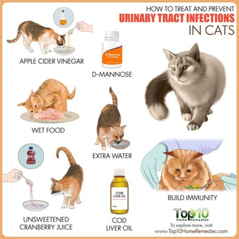 how to treat urinary tract infection in dogs how to treat and prevent urinary tract infections in cats