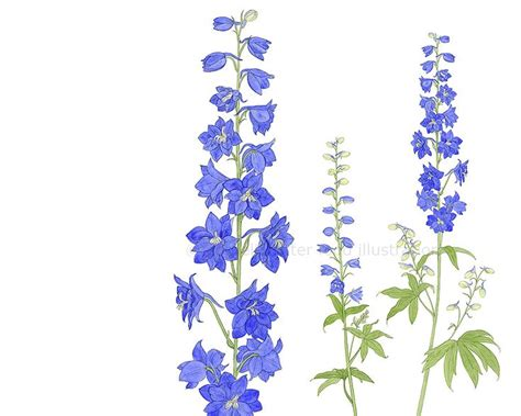 delphinium tattoo the 25 best larkspur ideas on minimal