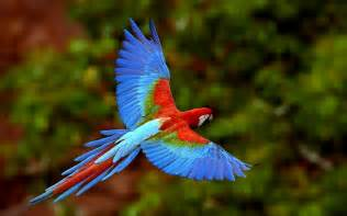 is better with a colorful birds wallpapers