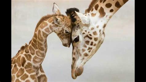 imagenes de la familia de animales animales en familia top 10 youtube