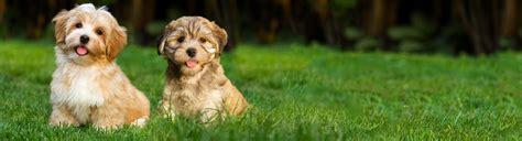 the puppy ri the puppy