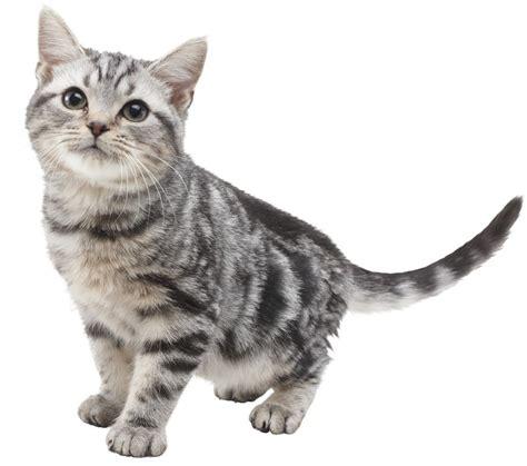 golden retriever cats nintendogs cats