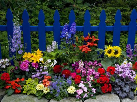 Flower In Garden Pictures Beautiful Flower Garden Pictures Photos And Images For And