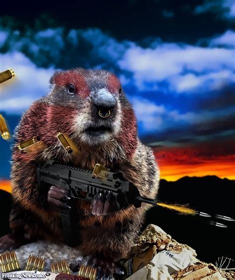 groundhog day killer battle groundhog with machine gun pictures freaking news