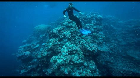 best place to dive the great barrier reef diving the great barrier reef 2017 scuba diving page
