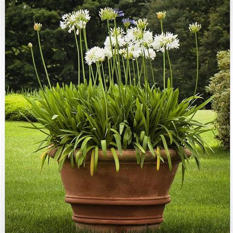 Terracotta Garden Planters by 17 Best Ideas About Large Terracotta Pots On Potted Plants Patio Rooting Roses And