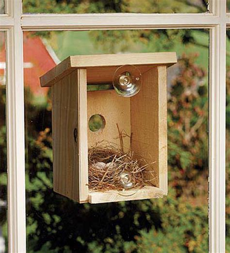 window view bird house window view bird nest box the green head
