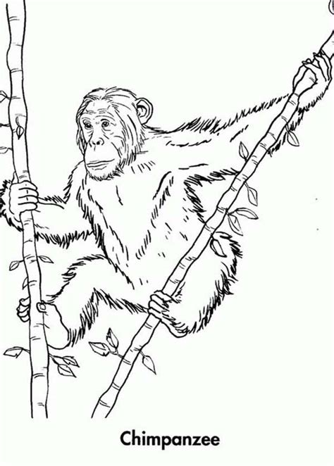 bamboo coloring page az coloring pages