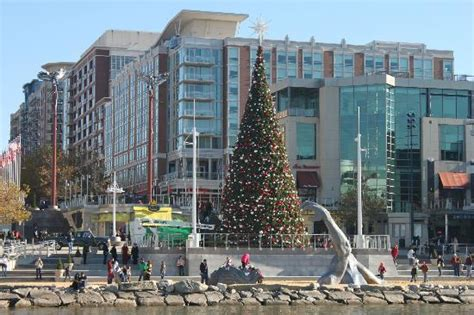 big christmas tree picture of harborfront area national