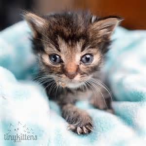 they rescued the tiniest 5 week old kitten 3 days later