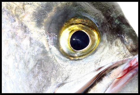 fish eye image gallery fish eye