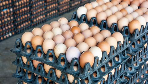 All The News Thats Fit To Eat Mar 19 2008 by All The News That S Fit To Eat Rising Egg Prices Sweet N