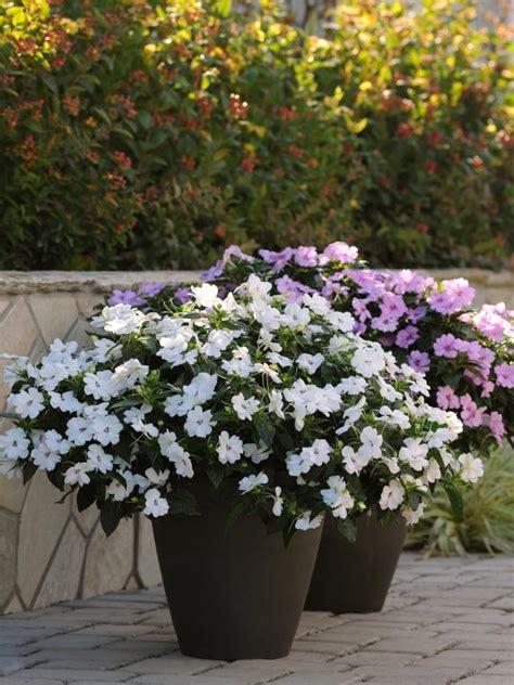 kill flowers  beginners hgtv