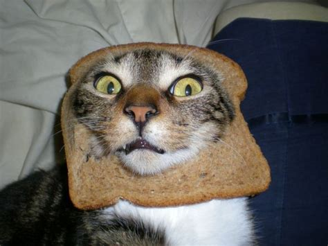 cat s face in bread this is not photoshopped i don t