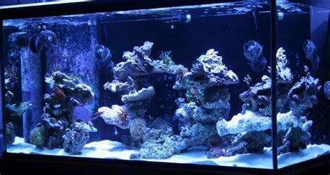 Marine Aquascaping by 12 Best Images About Aquascaping Ideas On
