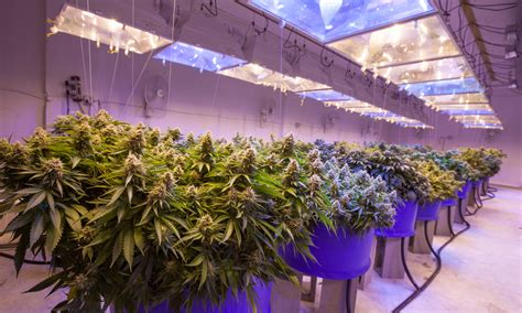 legalized cannabis spikes the california real estate market why the green rush means a new high in real estate markets