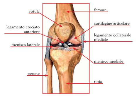 ginocchio dolore interno laterale dolore al ginocchio