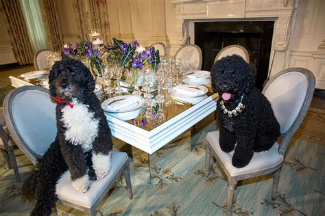 white house dogs obama file obama family pets bo left and sunny sit at a table in the state dining room of the white house 2014 jpg wikimedia commons