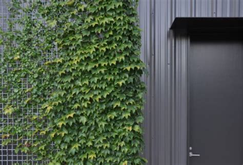 climbing plants that give your home a new look