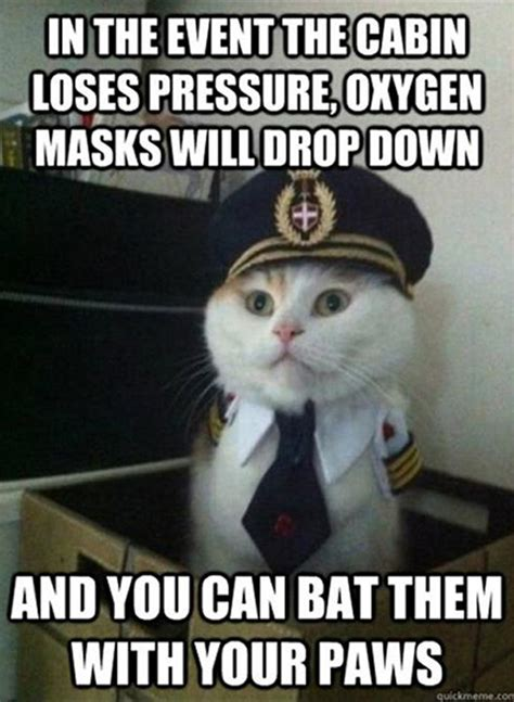 Random Cat Meme - 21 funny cat captions random funny cat