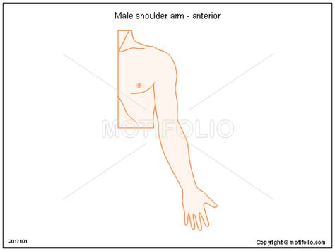 arm template shoulder arm anterior ppt powerpoint drawing