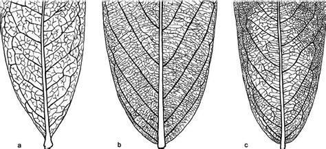 venation pattern analysis of leaf images leaf venation patterns in selected annonaceae species a