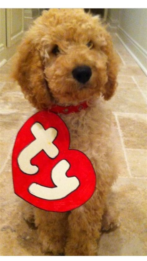 infant puppy costume beanie baby costume fuzzy today