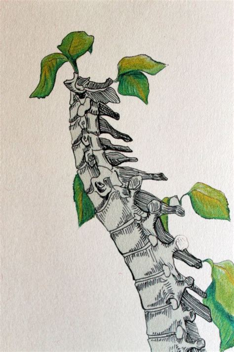 grow a backbone spine art print anatom 237 a medicina y