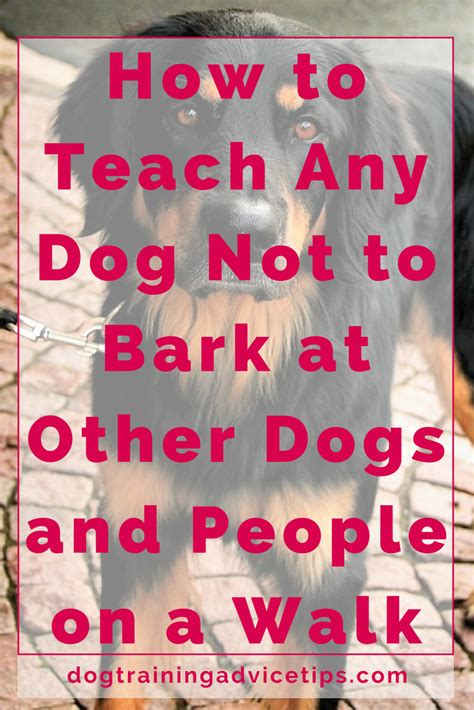 how to a small not to bark how to teach any not to bark at other dogs and on a walk