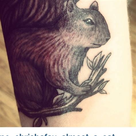 squirrel tattoos 1000 ideas about squirrel on acorn