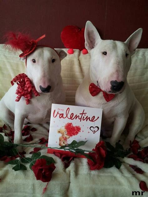 valentines animals celebrating their and loyalty