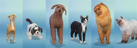 cats and dogs sims 4 breeds in the sims 4 cats and dogs sims